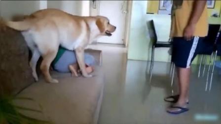 我小时候怎么就没养狗呢!