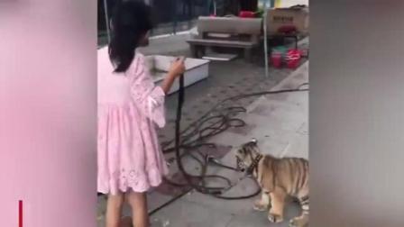 公园有人遛老虎! 还是一个9岁的女孩