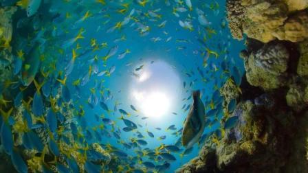 GoPro官方大赏视频 大堡礁潜泳