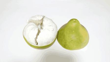 剥柚子又出新方法, 中间划一刀, 快速剥出完整柚子, 太方便了