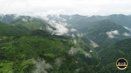 贵州农村大山风景优美, 云雾缭绕, 避暑度假的最佳去处