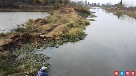 农村排水港鱼多, 他们每天钓十几斤, 能钓光了不?