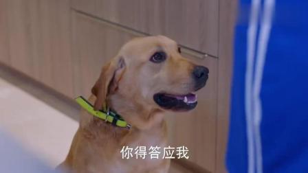 神犬小七: 她听到狗叫声, 就成了这个样子, 也太
