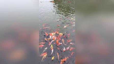 好多鱼哟! 红烧鱼! 清蒸鱼! 酸菜鱼! 松鼠鱼! 想要什么鱼有什么鱼