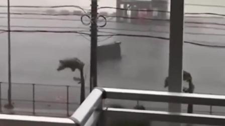 台风潭美在日本某地登陆, 风力达17级岸边汽车被
