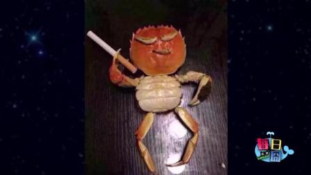 每日一囧 2018:原来螃蟹是这样吃东西的, 感觉自己活得都没小螃蟹优雅端庄