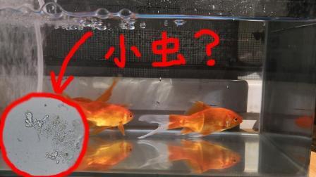将鱼缸中的水放大1000倍, 竟看到了满眼的寄生虫