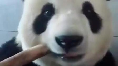 熊猫, 你是来搞笑的么?