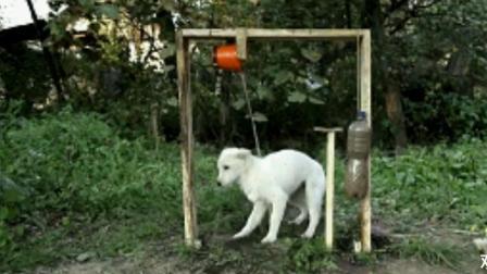 我说狗狗你可真会玩啊 爆笑视频