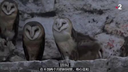 以前怎么没发现毛茸茸的猫头鹰是这么可爱的,