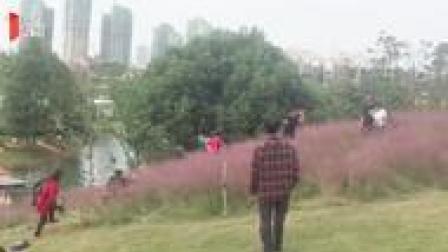 """杭州""""粉黛""""被踩踏事件引起关注 成都网红粉黛也遭了殃"""
