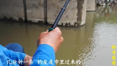小河流水桥洞下野钓, 短杆拉饵连杆上鱼, 这收获让人高兴