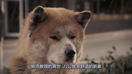 一部《忠犬八公的故事》, 感动了多少人, 现在看依然泪流满面