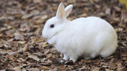 一只彪悍的小兔子, 欺负2只小猫, 主人看不过眼了