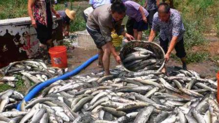 让美国人人害怕的地狱鱼, 在中国却是餐桌上的美味, 原因哭笑不得