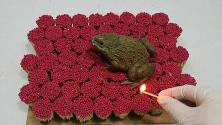 国外小伙用青蛙来做实验, 当10000根火柴点燃的那一瞬间, 画面让人大跌眼镜