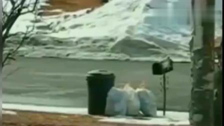 环卫工路边收垃圾, 突然性情大变, 视频拍下离奇