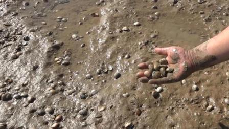 赶海发现一个大洞还以为是只皮皮虾八爪鱼来! 结果是只螃蟹!