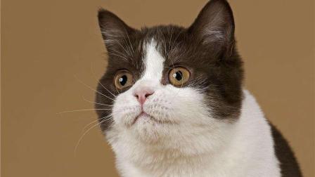 没见过这么怂的猫, 被老鼠追着跑, 猫脸丢尽了