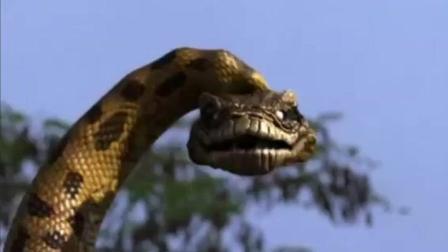 《狂蟒之灾》人和蟒蛇比速度, 身高才是硬道理