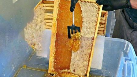 牛人在养蜂场, 现场刮下来一大块蜂蜜, 气得蜜蜂