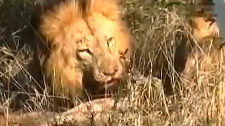 最可怕和残忍杀害狮子, 恐怖残忍杀害狮子国王骄