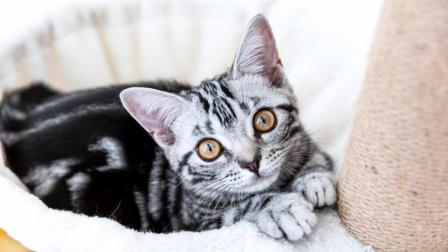 荷包鱼旦 第一季 铲屎官照顾孕妇猫必备用品!