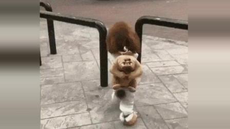 这狗一定是成精了 爆笑集锦