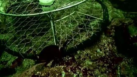 猎奇世界上最大的鱿鱼 长达20米以上 它竟留着蓝