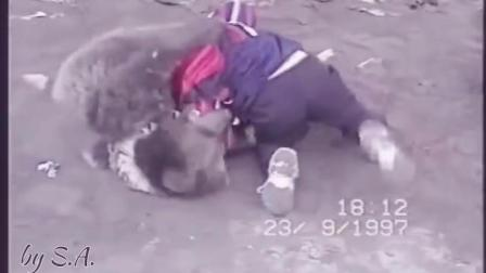 小鹰小时候和熊练摔跤的视频曝光