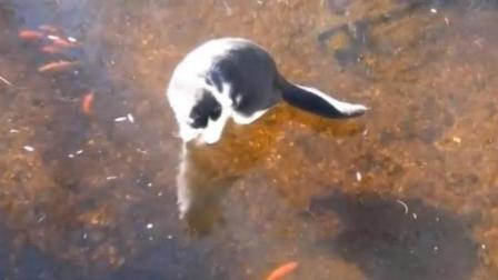 """猫咪费劲心思抓冰下的鱼, 却在冰上开始""""滑冰"""", 鱼: 傻猫无疑"""