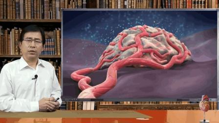 为何FDA批准肺鳞癌化疗用血管生成抑制剂雷莫卢单抗而非贝伐单抗