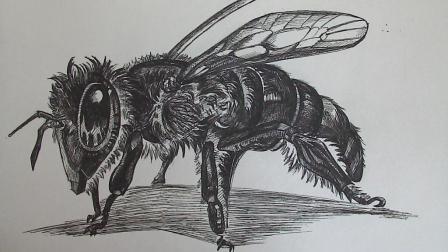 初学素描的你可以看一下, 蜜蜂的简单画法