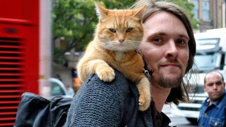 猫奴必看暖心之作, 一人一猫, 温馨励志走天下—《流浪猫鲍勃》