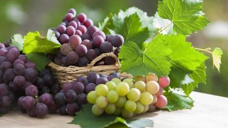 挑选葡萄的3个秘诀, 卖水果的最怕你知道, 快看看到底是怎么回事吧