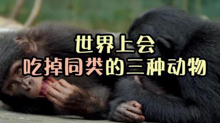 世界上会吃掉同类的三种动物, 第一名你绝对见过, 一言不合就下口