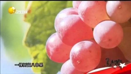 辽中: 四十年培育出超甜玫瑰香