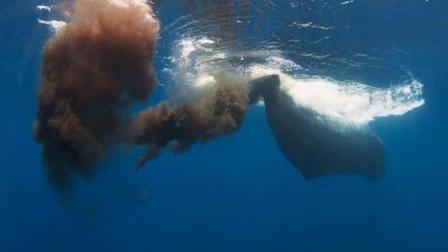 """为什么鲸鱼粪便被称为""""海中黄金""""? 到底有什么用? 看完长见识了"""