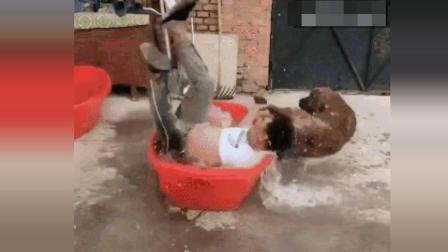 哈哈 给狗狗洗澡 主人却进去洗了 爆笑