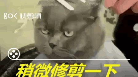 搞笑动物短视频: 稍微修剪一下就好