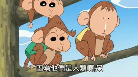 蜡笔小新: 什么? 有和春日部五傻长的一模一样的猴子, 太逗了