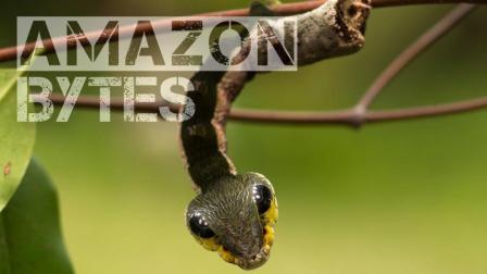 赫摩里奥普雷斯毛虫 一种可以伪装成毒蛇的奇异生物