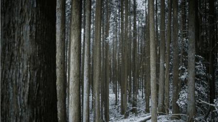 """日本神秘自杀森林: 当地为保护树木, 每年秋季组织""""收尸""""行动!"""