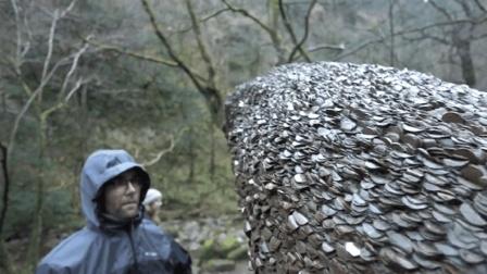 """全世界最有钱的树, 摇一摇就会掉钱! 这就是传说中的""""摇钱树"""""""