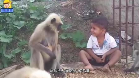 搞笑动物些列: 野生的猴子到底有多机敏? 网友忍