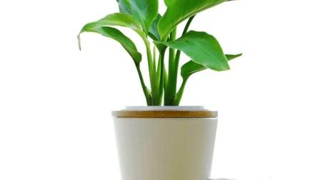 养花不用买肥料, 资深花友教你自制天然花肥, 你也能把花儿养爆盆