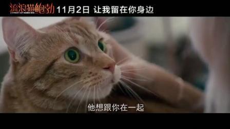 《流浪猫鲍勃》 终极预