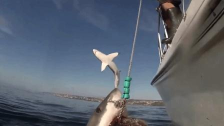 海上钓鱼, 拉上来一看愣了