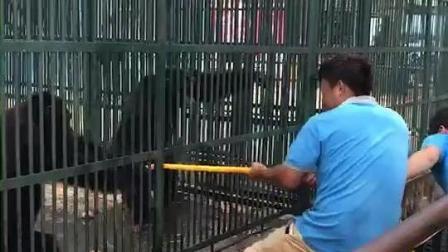 这两个小哥和猩猩干上了哈哈, 结局让我大笑了