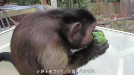 搞笑: 骗猴子吃一个辣椒, 辣到猴子怀疑人生
